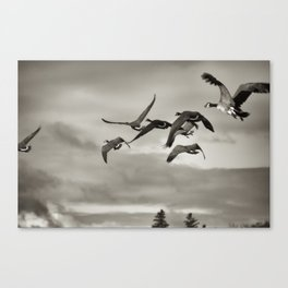 Geese in Flight ,  Finger Lakes 2013 Canvas Print