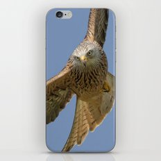 Red Kite iPhone Skin