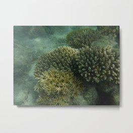 Cool Coral Metal Print