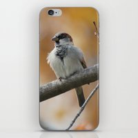 sparrow iPhone & iPod Skins featuring Sparrow by Tammi Hofstetter