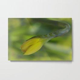 little pleasures of nature -8- Metal Print