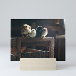 Chicks on Crate Mini Art Print