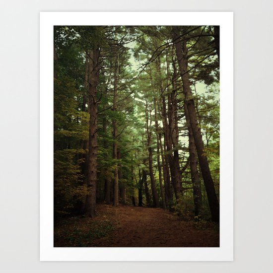 Pine Trail Art Print