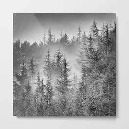 BW. Early moorning... Into the foggy woods Metal Print