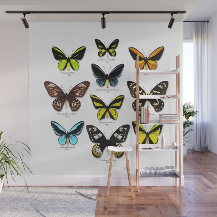 Butterfly012_Ornithoptera Set1 on White Background Wall Mural