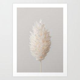 Botanical Dried Bunny Tails Grass Art Print