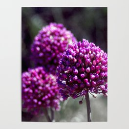 Wilde Onion Pink Flowers Poster