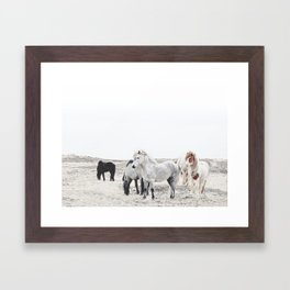 WILD AND FREE  1 - HORSES OF ICELAND Framed Art Print