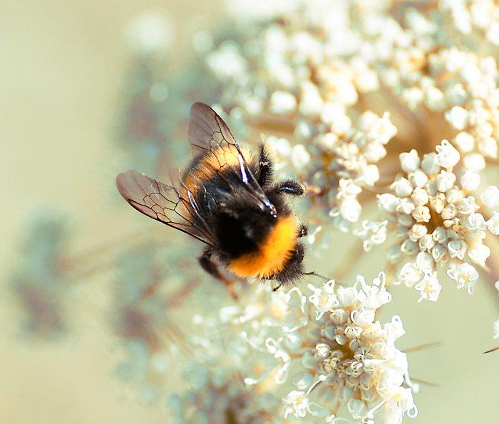 Bumblebee Metal Travel Mug