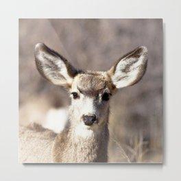 Watercolor Deer, Mule 09, Crestone, Colorado, Bambi-eyes Metal Print