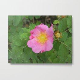 Wild South Dakota Rose Metal Print