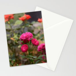 Button Roses Stationery Cards