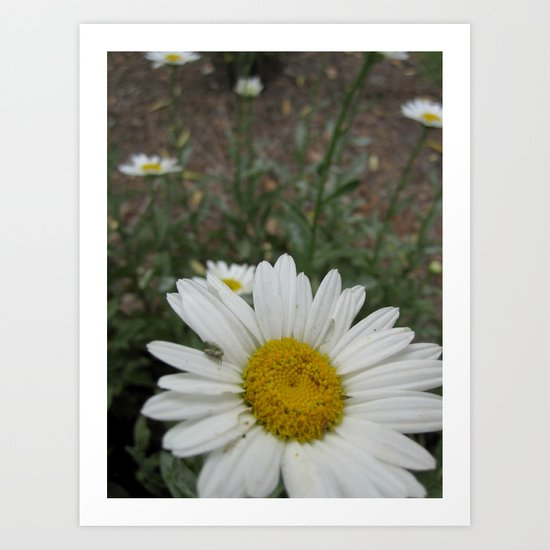 "Best ""daisies"" of my life Art Print"