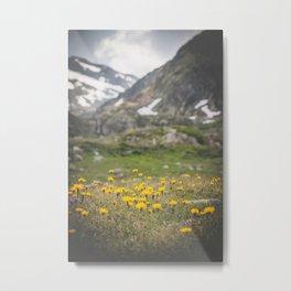 beautiful wild flowers Metal Print