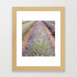 Lavendar Farm Framed Art Print