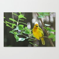 wildlife Canvas Prints featuring Wildlife by sannngat