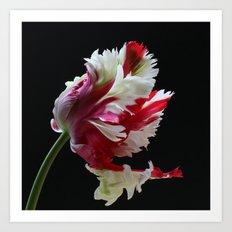 Parrot Tulip Art Print