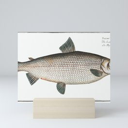 Broad-Gwiniad (Salmo Thymallus latus) from Ichtylogie, or Natural History General and Particular of Mini Art Print