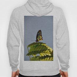 The Queen Alexandra Bird Wing Butterfly by Teresa Thompson Hoody