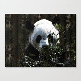 Chinese Giant Panda Bear Canvas Print