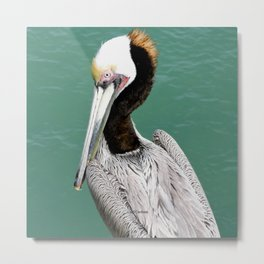 Brown Pelican Upstanding Metal Print