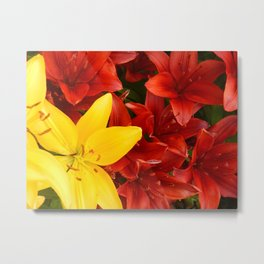"""A Gathering of Lilies"" - 1 [D4465~12] Metal Print"