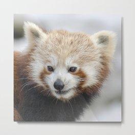 Red Panda 2 Metal Print