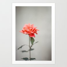 GUATEMALA ROSE Art Print