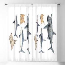 Shark diversity Blackout Curtain