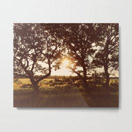 Warm sunset through trees. Holme Hale, Norfolk, UK. Metal Print