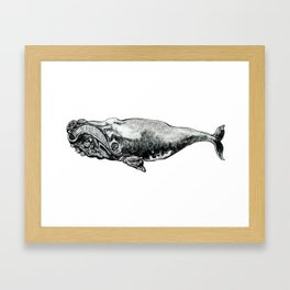Right Whale Framed Art Print