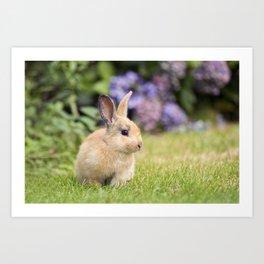 Cute Baby Rabbit Art Print