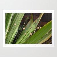 Leaves & Seedpods Art Print