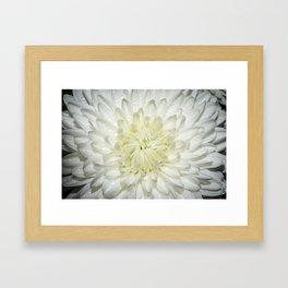 Delicate Flower Framed Art Print