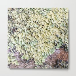 Beautiful messthetics bright green lichen on tree trunk bark macro Metal Print
