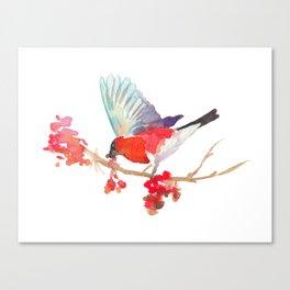 Bullfinch bird with ashberry Canvas Print