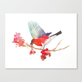 Bullfinch bird with ashberry Canvas Print