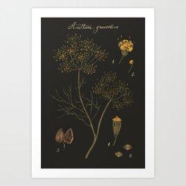 Dill (Dark Background) Art Print