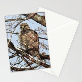 Juvenile Red-Shouldered Hawk Stationery Cards