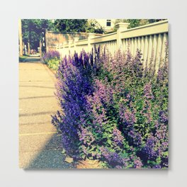 Catnip along the walk Metal Print
