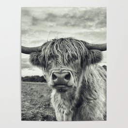 Highland Cow II Poster