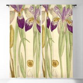 Iris clarkei 136 8323 Blackout Curtain