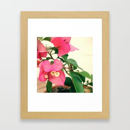 #44Photo #Bouganvilla #OpenAccessToPromises #MyFavoriteFlower Framed Art Print