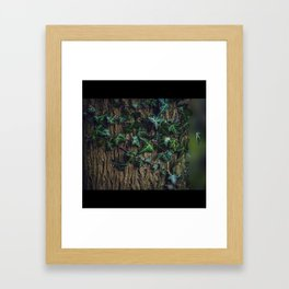 Ivy on the tree Framed Art Print