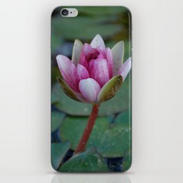 Water Lily 5 iPhone Skin