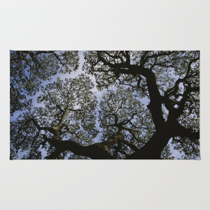 Oak Tree Reaching For The Sky Rug