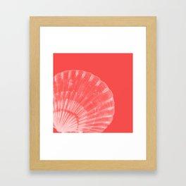 Coral Scallop Framed Art Print