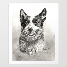 Australian Cattle Dog Drawn With Graphite Art Print