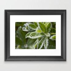 Morning Dew II Framed Art Print