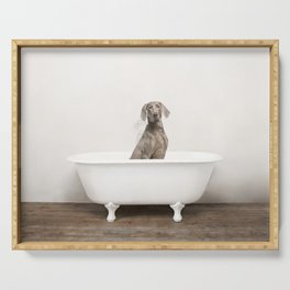 Weimaraner Dog in a Vintage Bathtub Serving Tray